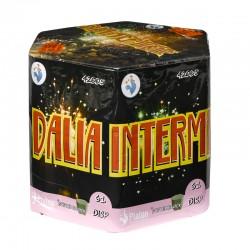 DALIA + INTERMITENTE